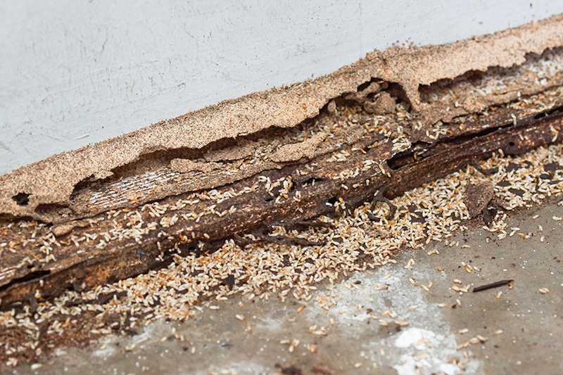Termite damaged wood seen while preforming home inspection services